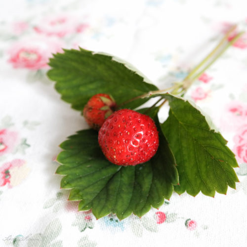 Bio-Erdbeere.