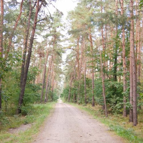 Im Wald. Der Weg ist das Ziel.
